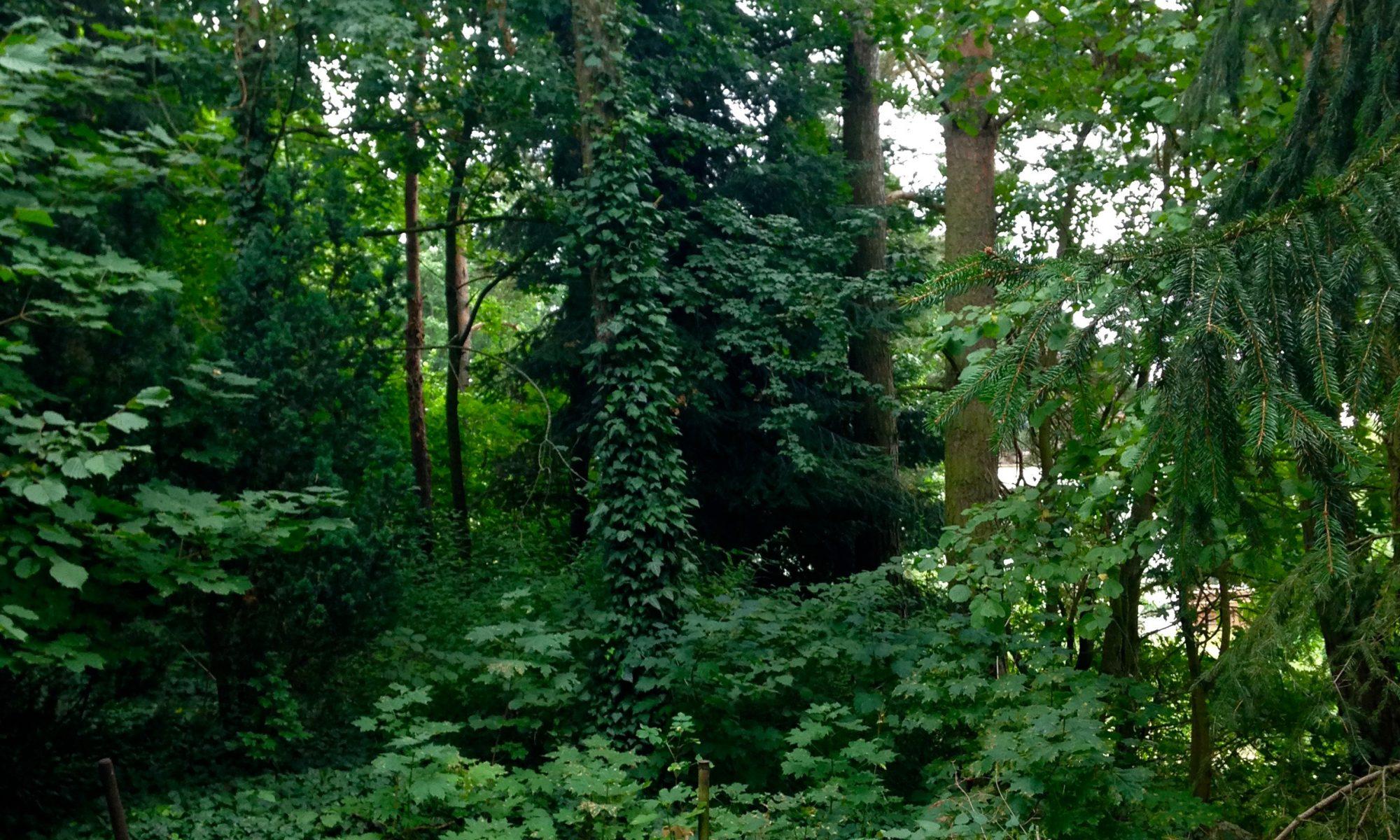 Waldwohnen